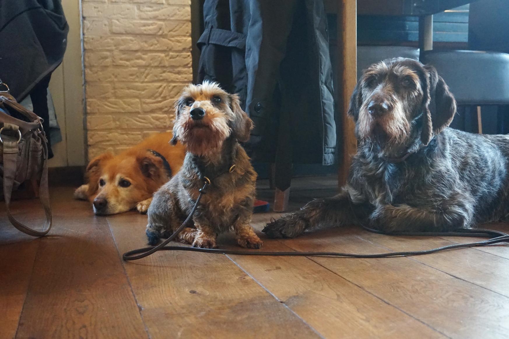 Texel Hotel Prins Hendrik Fruehstueck mit Hunden