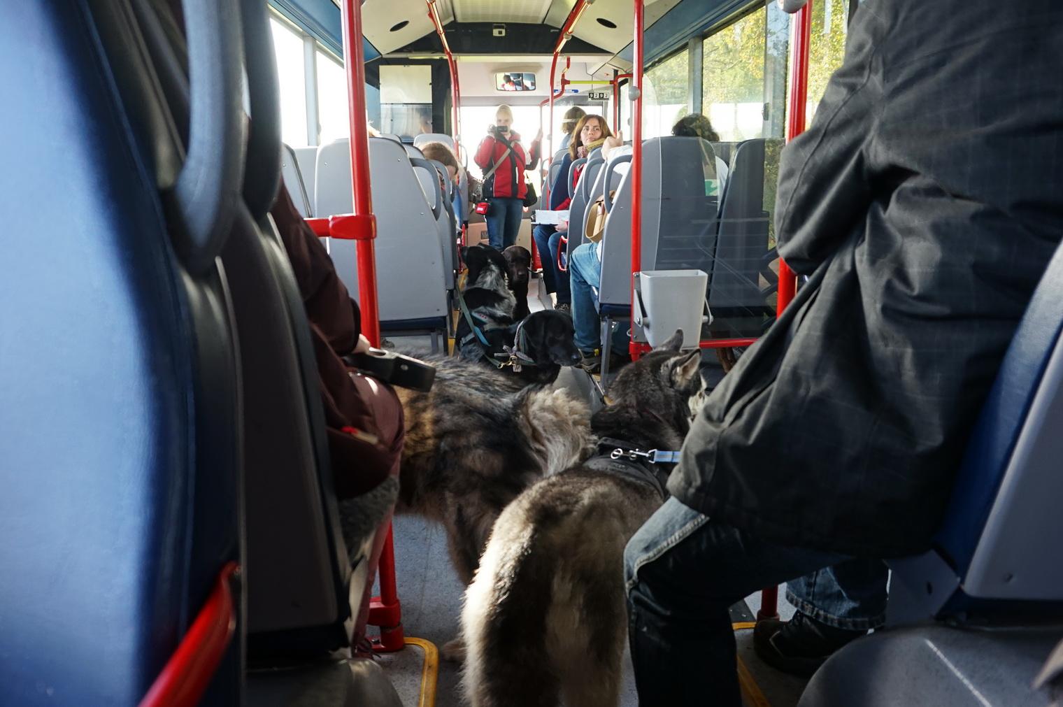 Texel Hunde im Bus 1