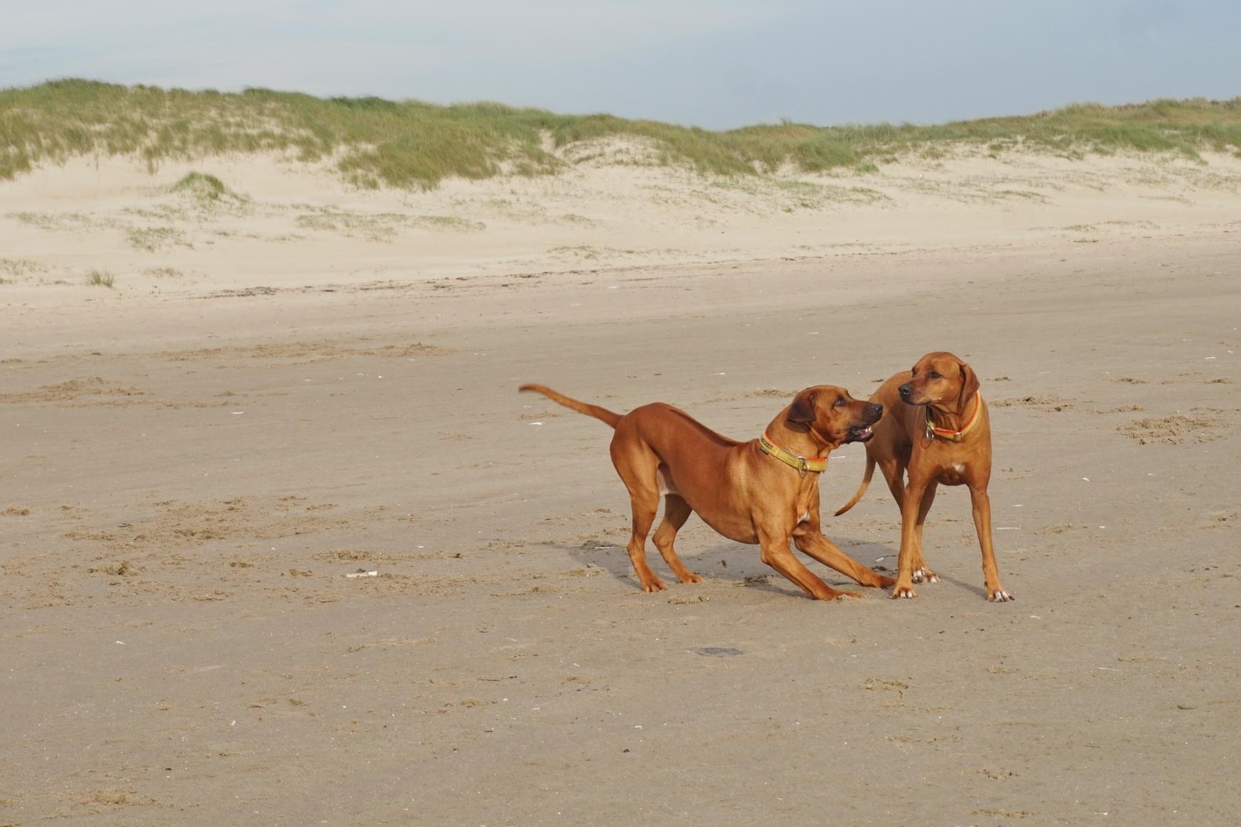 Texel Hundewanderung De Hors 10
