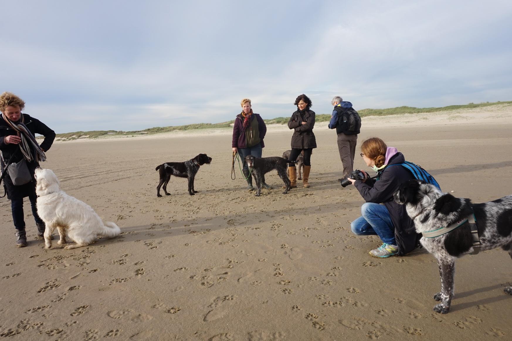 Texel Hundewanderung De Hors 13
