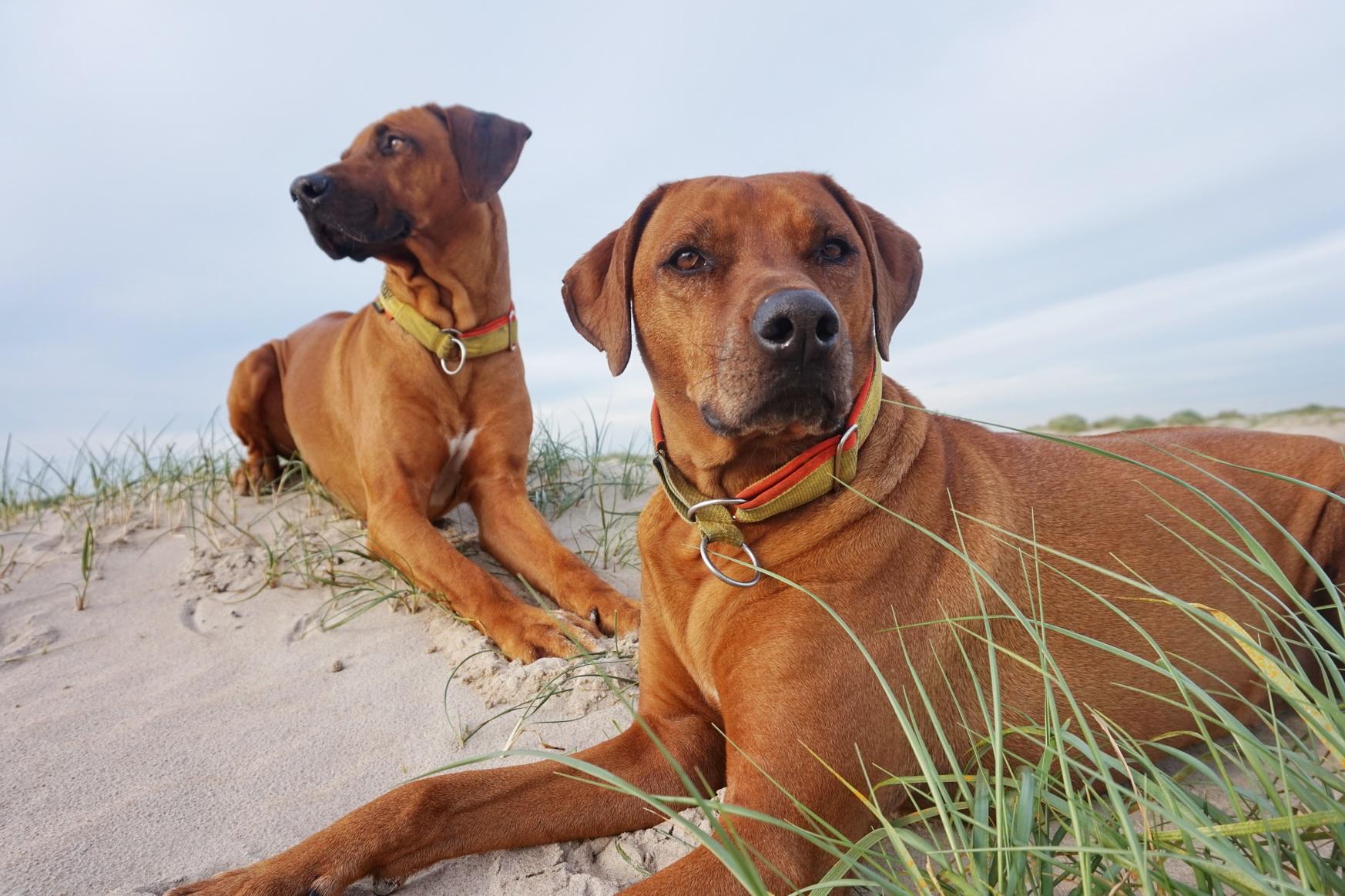 Texel Hundewanderung De Hors 22