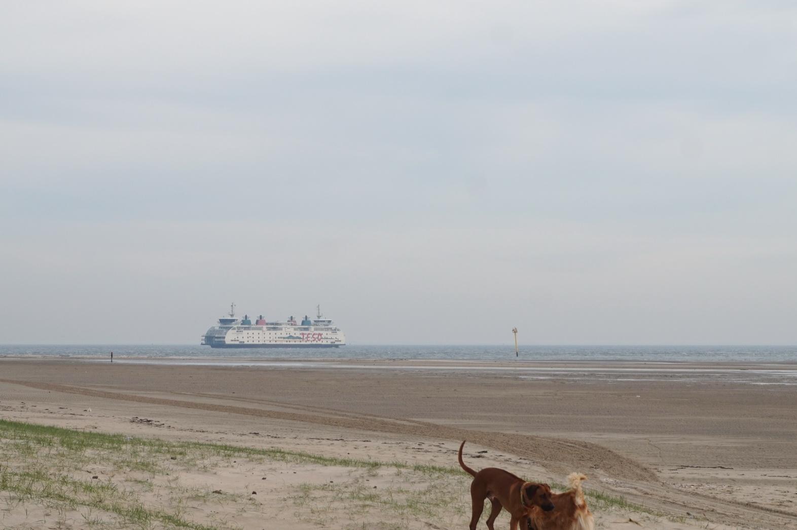 Texel Hundewanderung De Hors 3