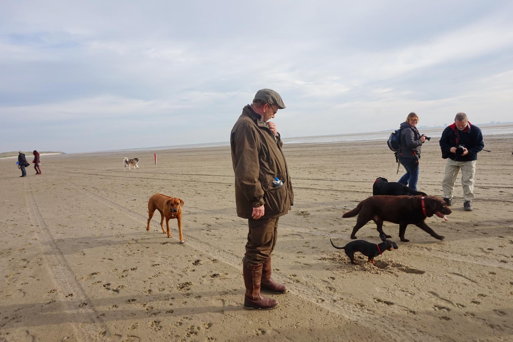 Texel Hundewanderung De Hors 8
