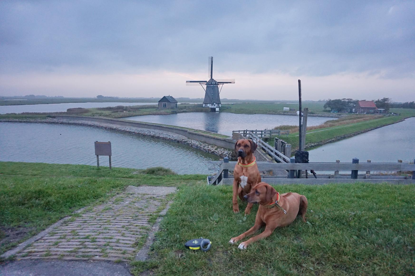 Texel Windmuehle am Deich von Oosterend 2
