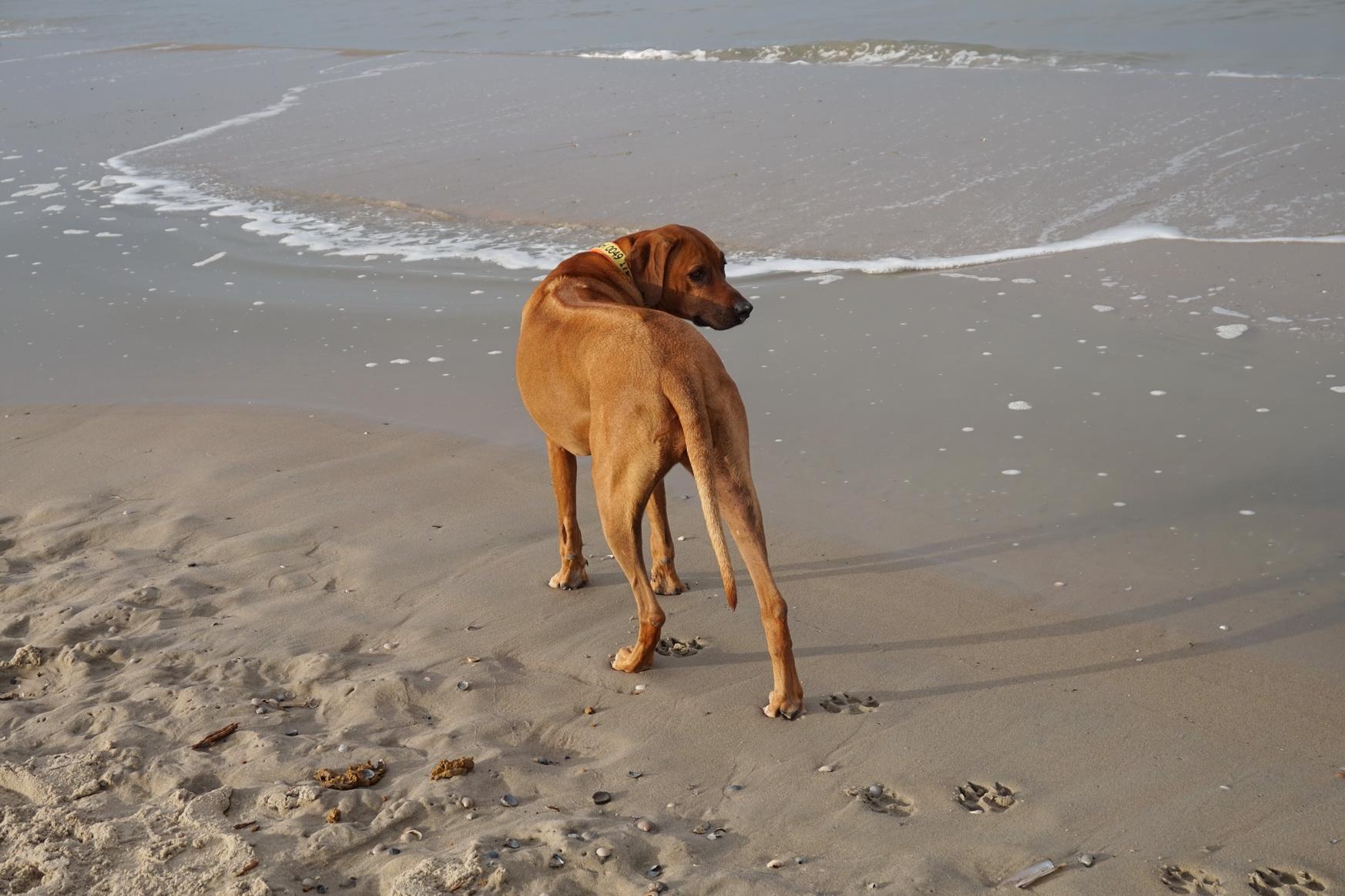 Texel De Koog Strand 5