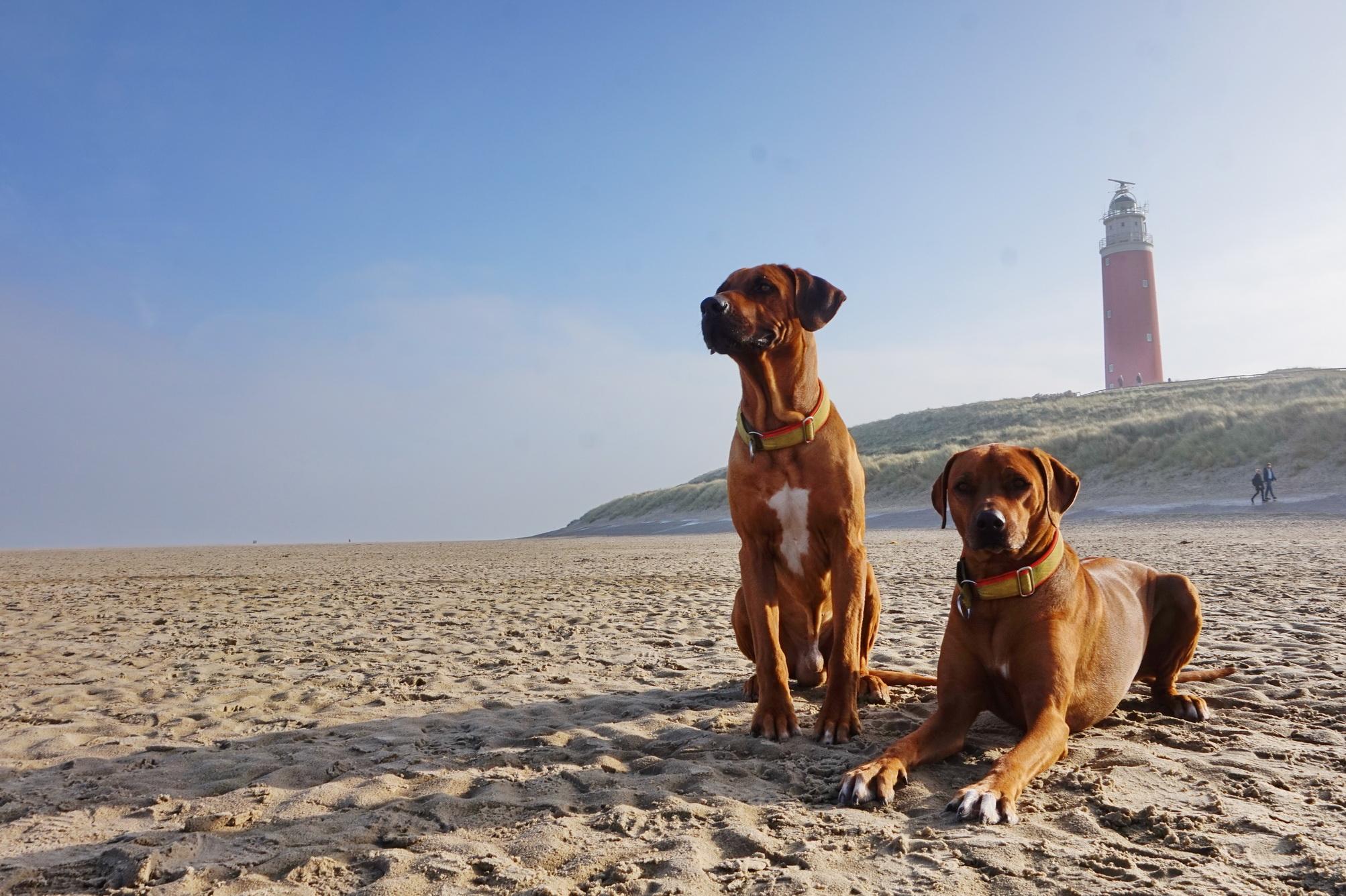 Texel Leuchtturm 4