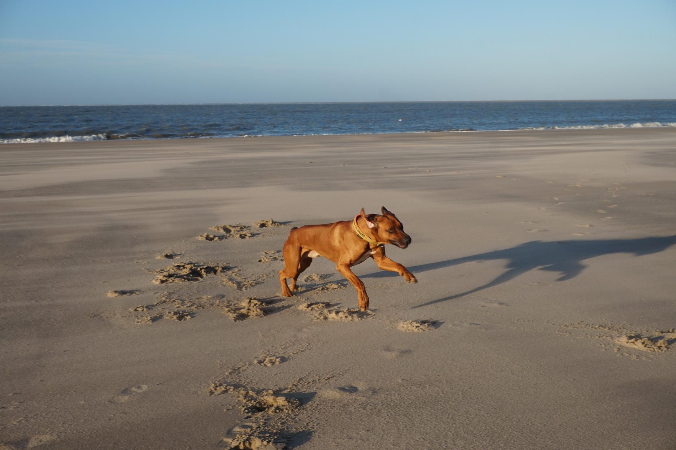 Dayo war auch nach über einer Stunde Toben am Strand noch ein kleiner Spieleratz ... mit fast 8 Jahren!