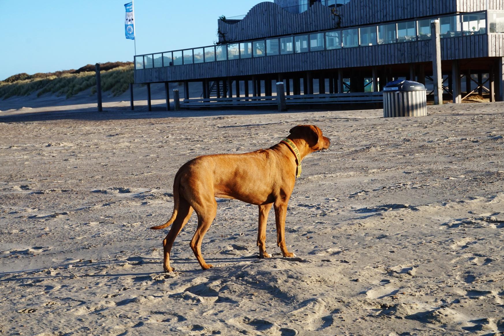 Suri hasst Wasser, aber sie liebt den Sand und die Dünen ...