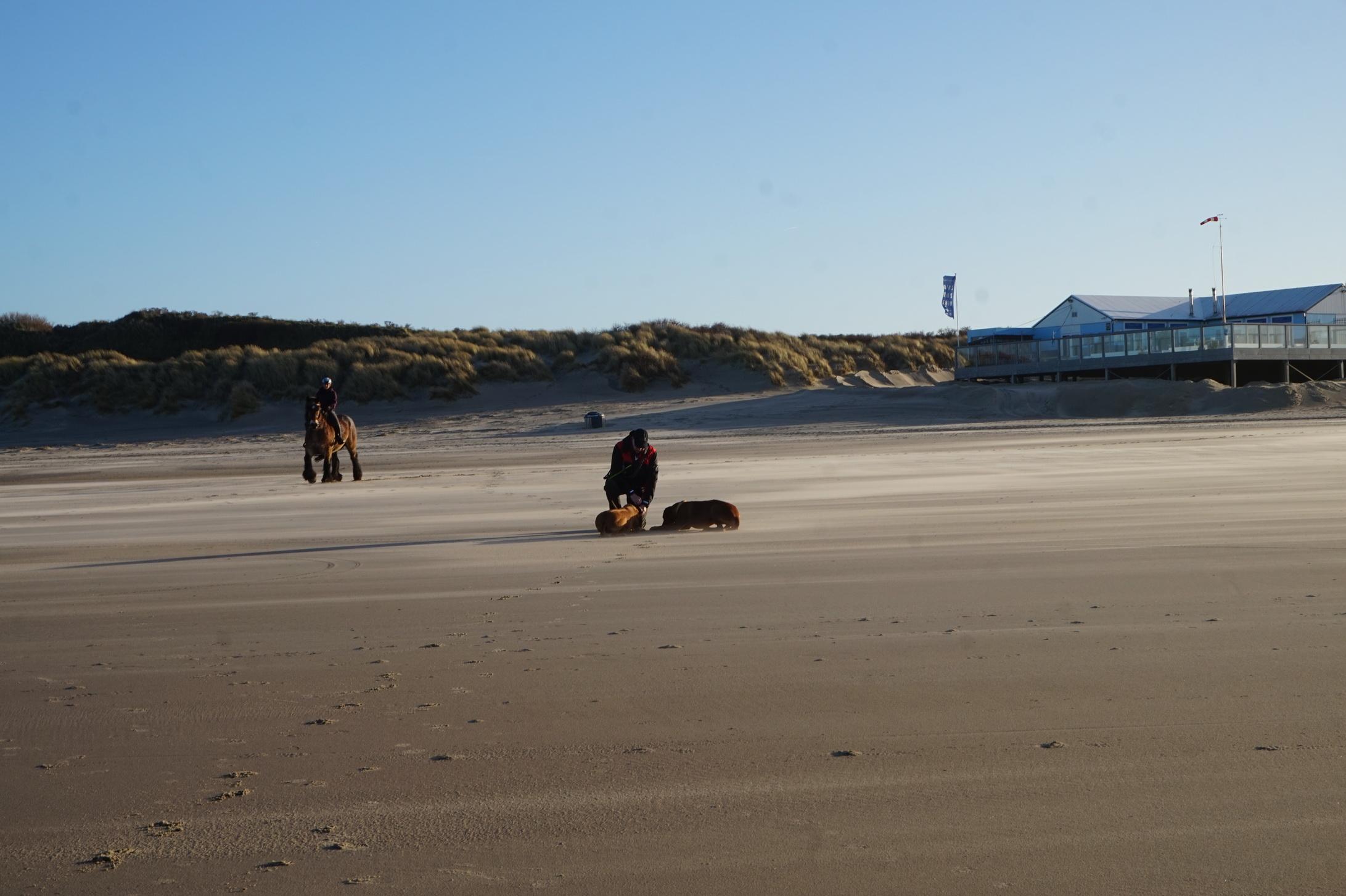 Der Strand gehört im Winter den Hunden, Pferden und wenigen Spaziergängern