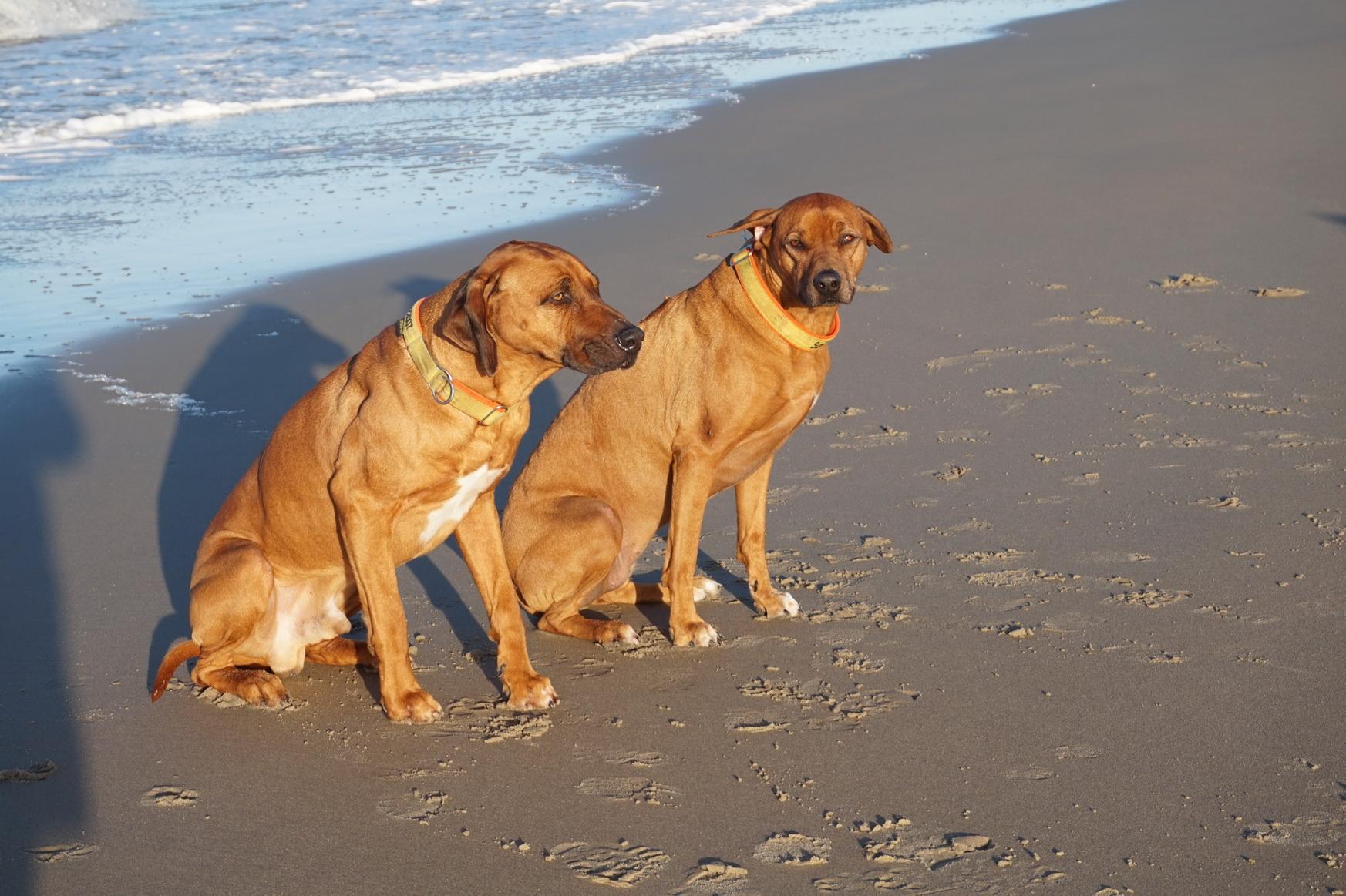 Dayo und Suri posieren am Wasser ...