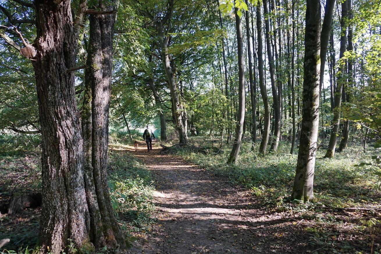 Milanwanderwege Niedererbach Westerwald 11
