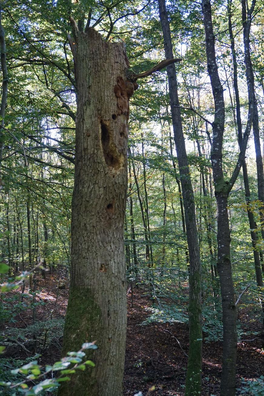 Milanwanderwege Niedererbach Westerwald 25