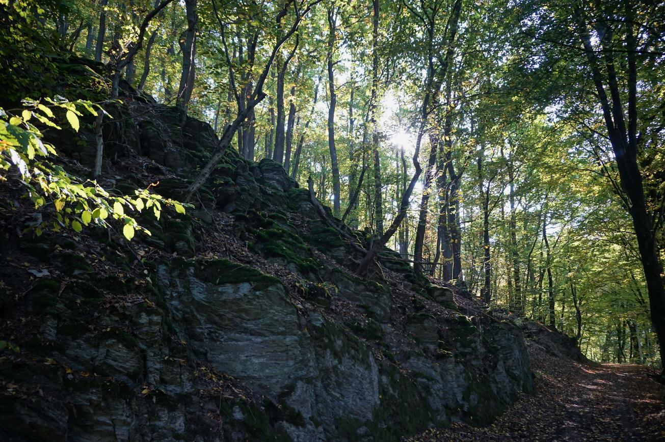 Milanwanderwege Niedererbach Westerwald 4