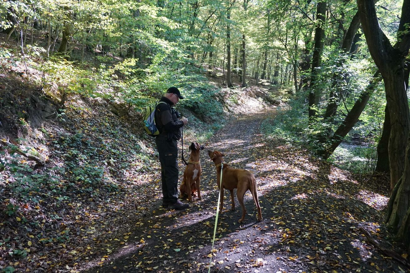 Milanwanderwege Niedererbach Westerwald 7