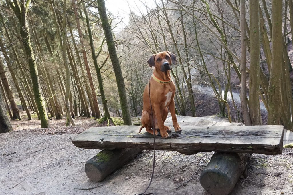 Im Februar haben wir den Wildpark in Gackenbach besucht und einmal mehr festgestellt, dass es toll ist, wenn man in einer Ferienregion lebt ...