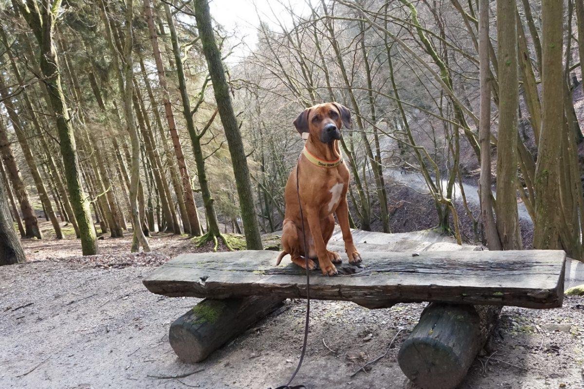 Wild- und Freizeitpark Westerwald - zu Gast bei Herrn Jobst