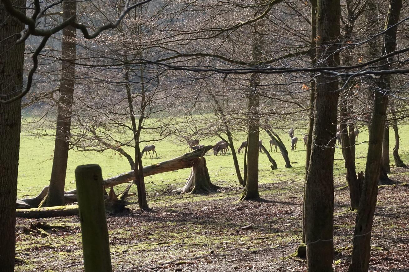 Wildpark Gackenbach Westerwald 18