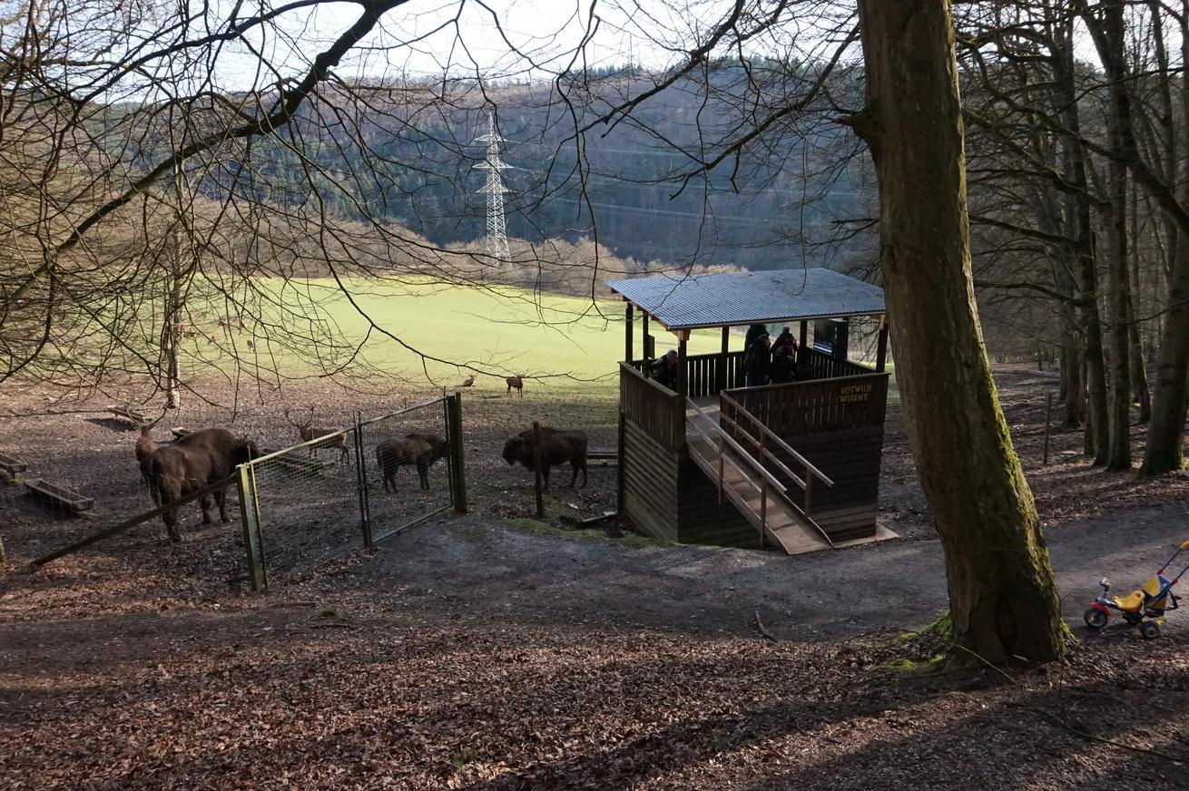 Wildpark Gackenbach Westerwald 20