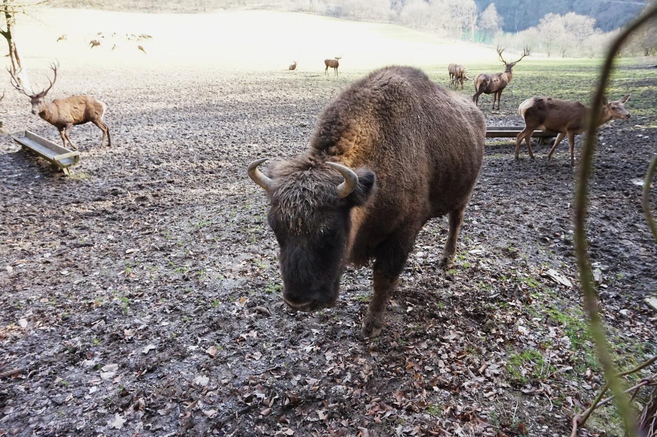 Wildpark Gackenbach Westerwald 21