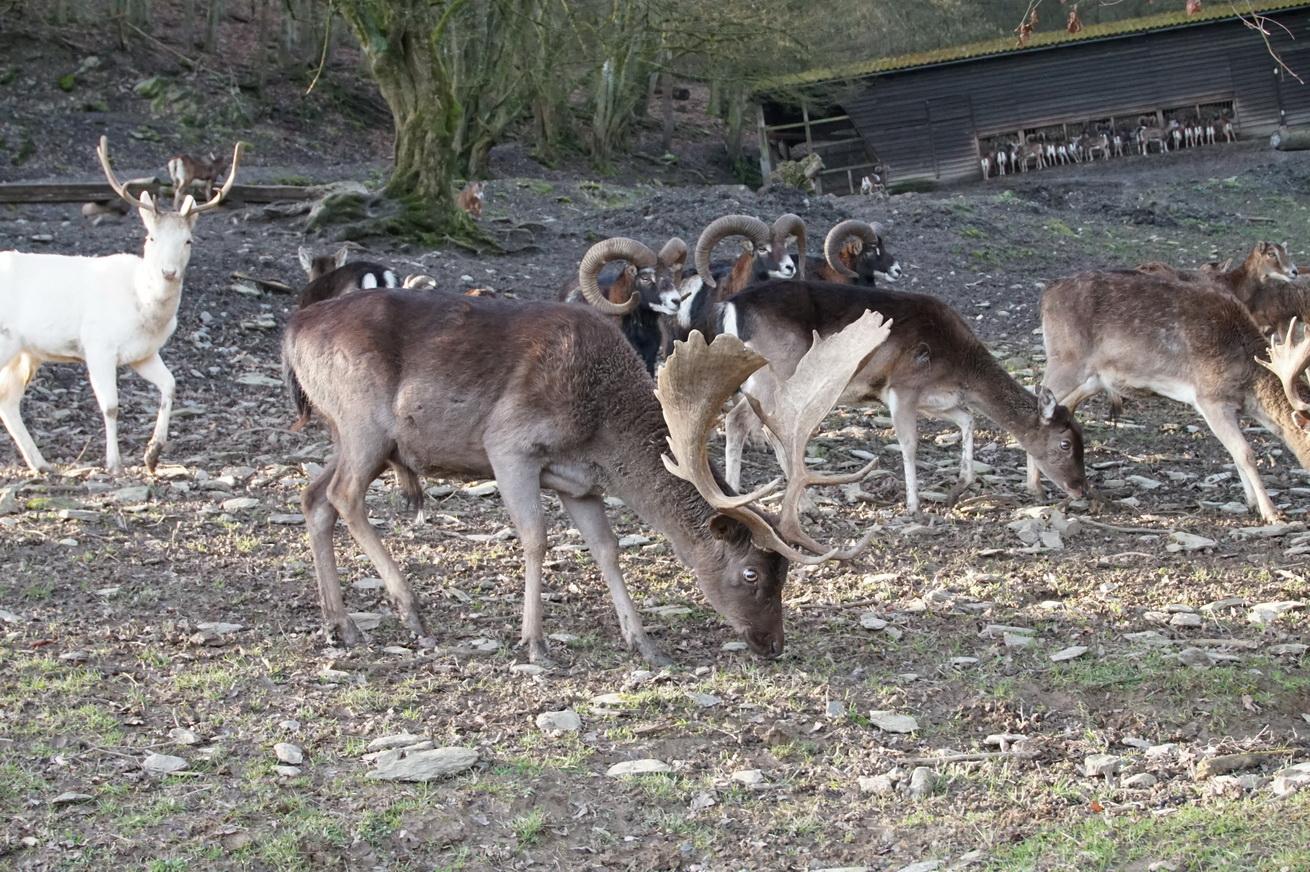 Wildpark Gackenbach Westerwald 33