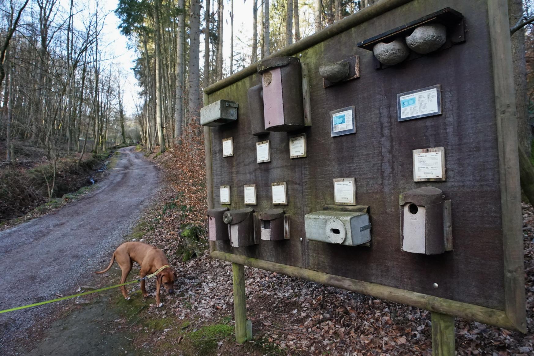 Informationen zum Thema Vogelnistplätze lassen Suri völlig kalt.