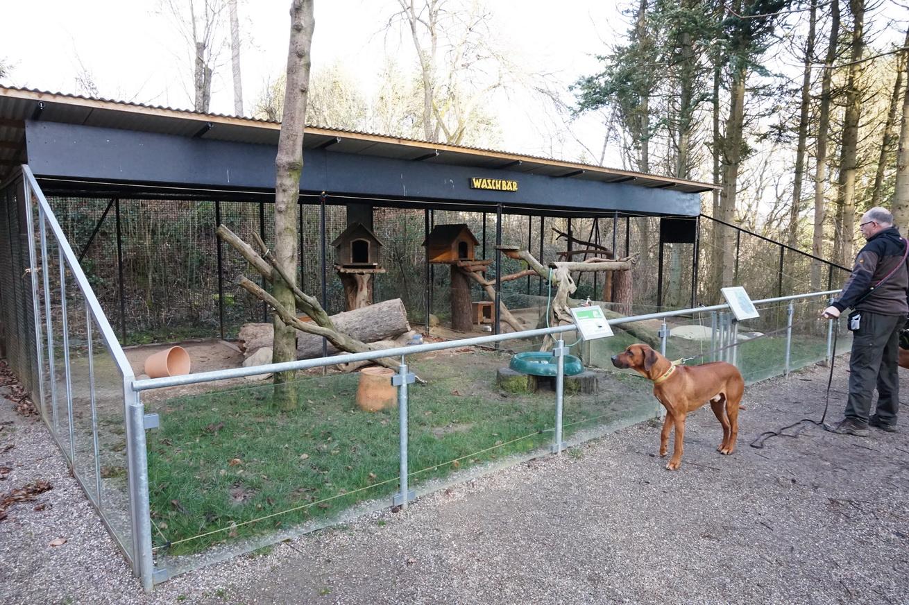 Wildpark Gackenbach Westerwald 40
