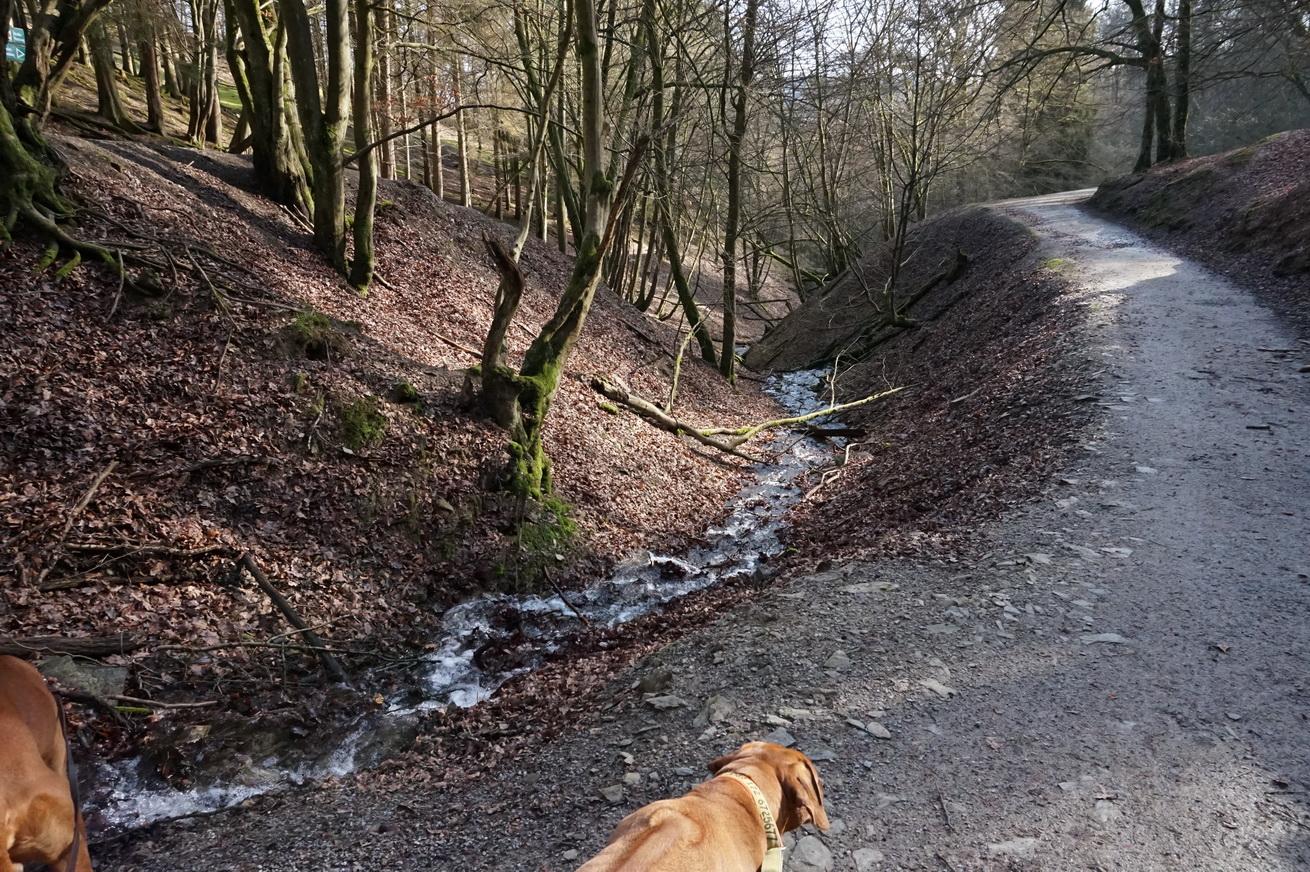 Wildpark Gackenbach Westerwald 7