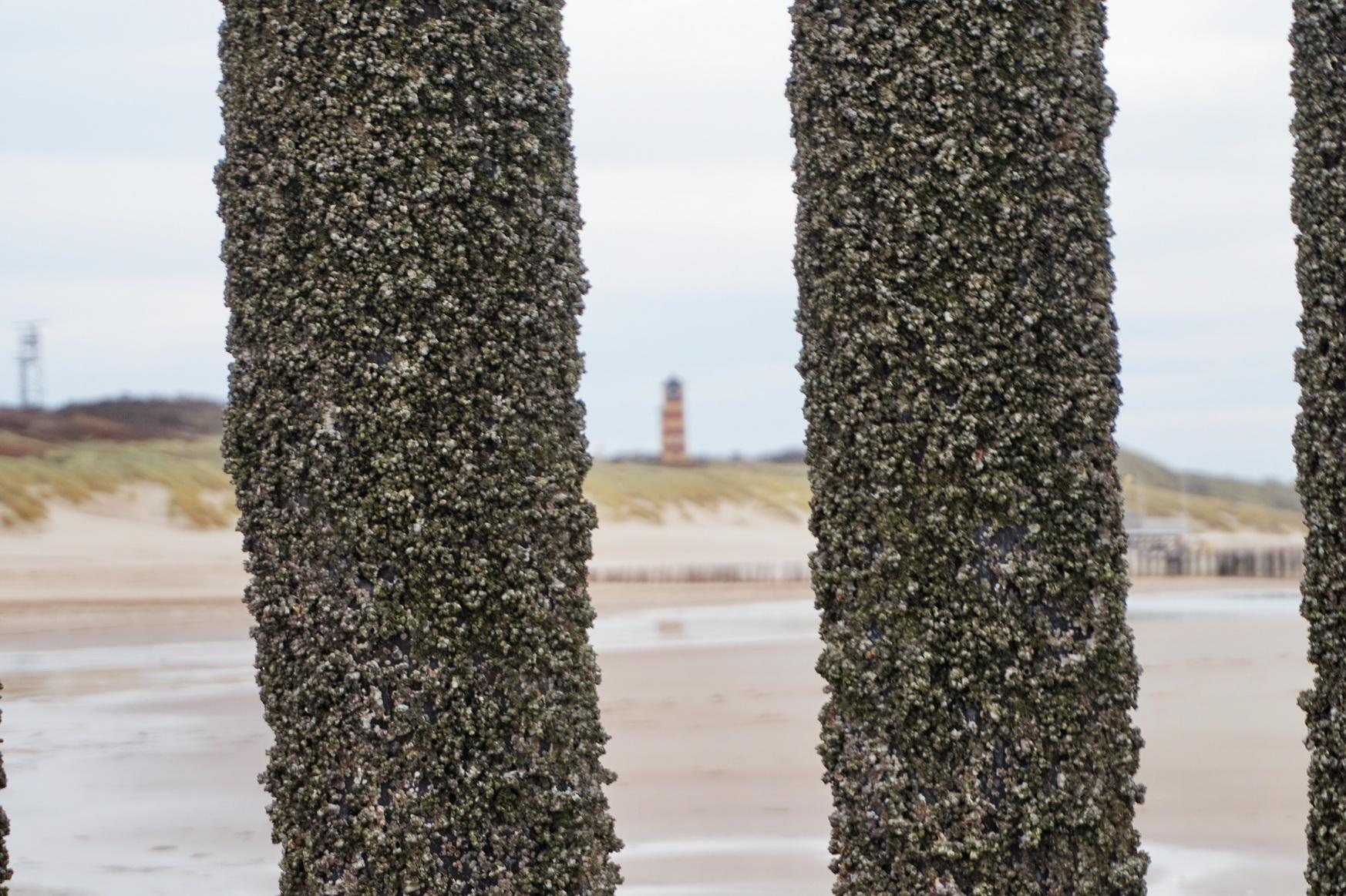 Zeeland - Strand von Dishoek 13