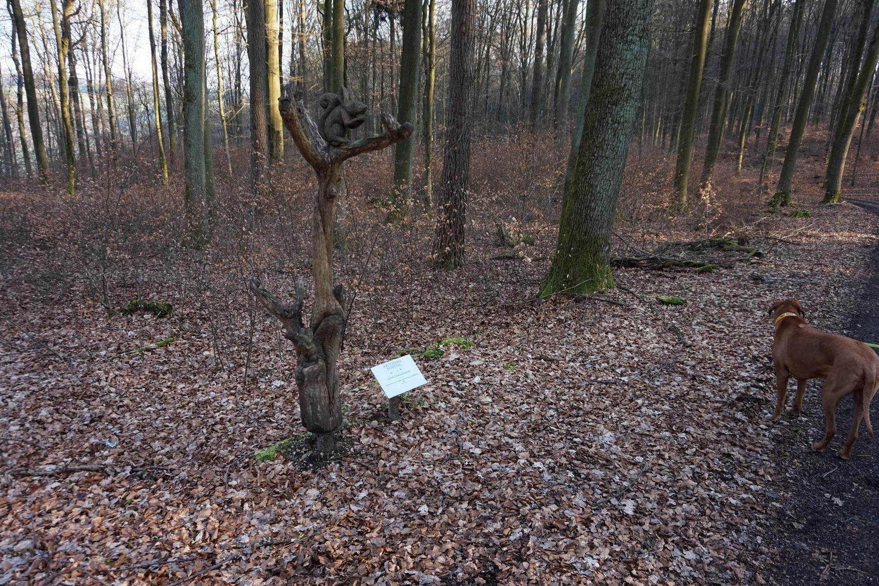 Eichhörnchenbaum, Simone Carole Levy