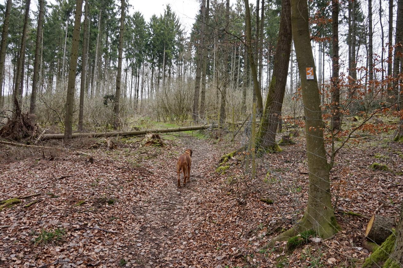 Blasiussteig Limburger Land 9