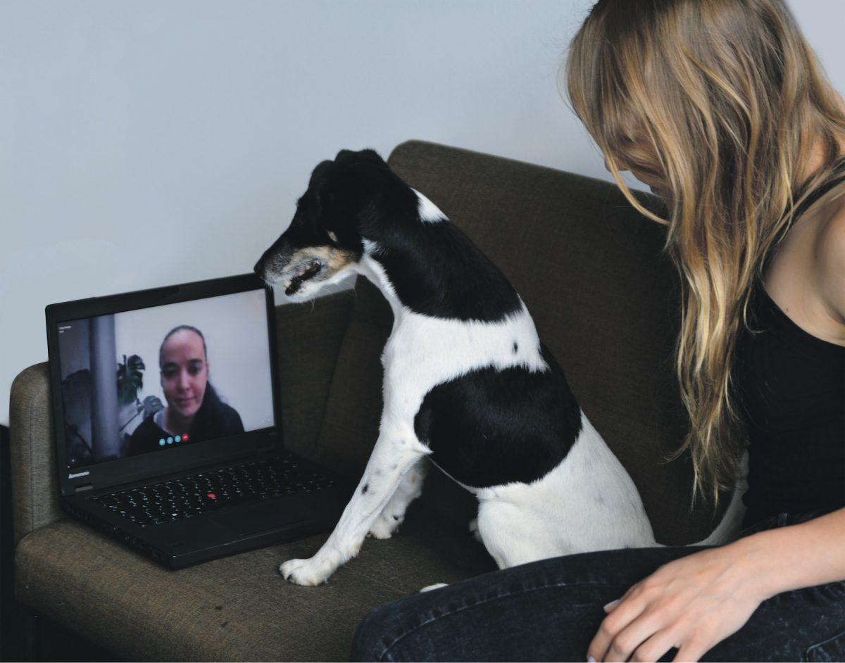 Von Pressemitteilungen und Telefonaten mit Haustieren
