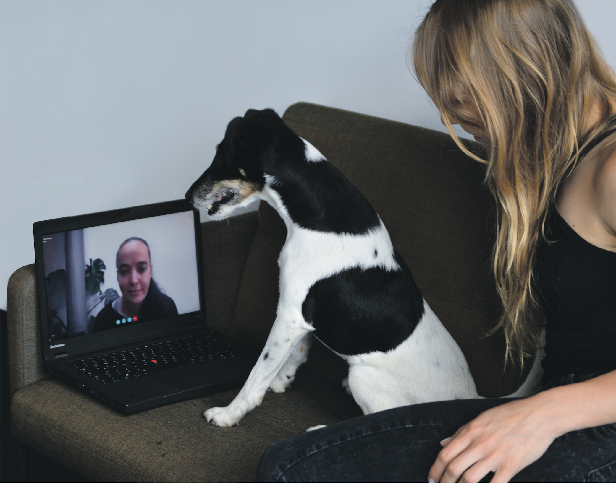 Skype Call für den Hund