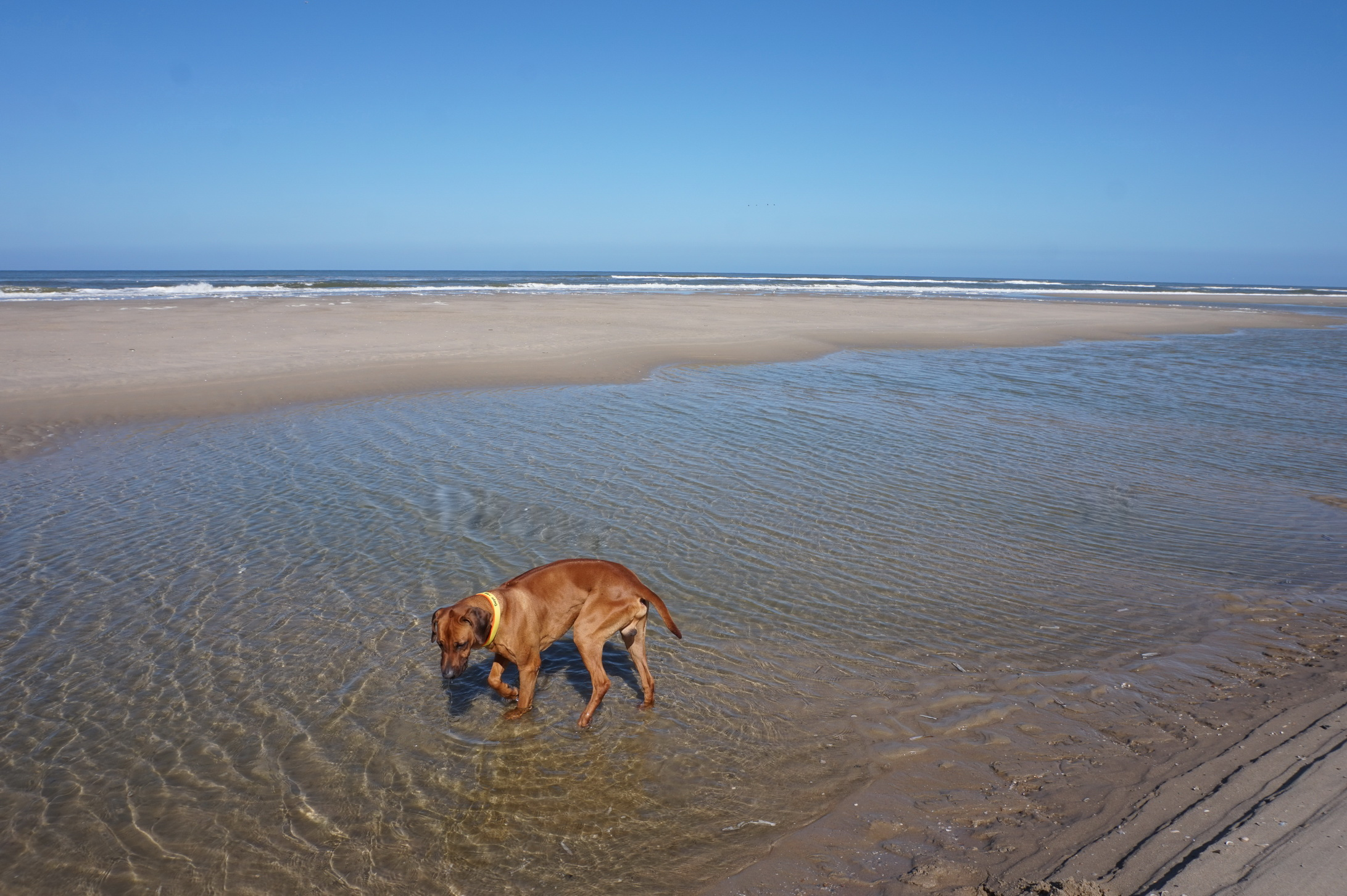 Dayo geht auch schon einmal ins Wasser ...