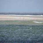 Nach einer Stunde Fahrt auf der Texel 44 kommen wir an der Robben-Sandbank an