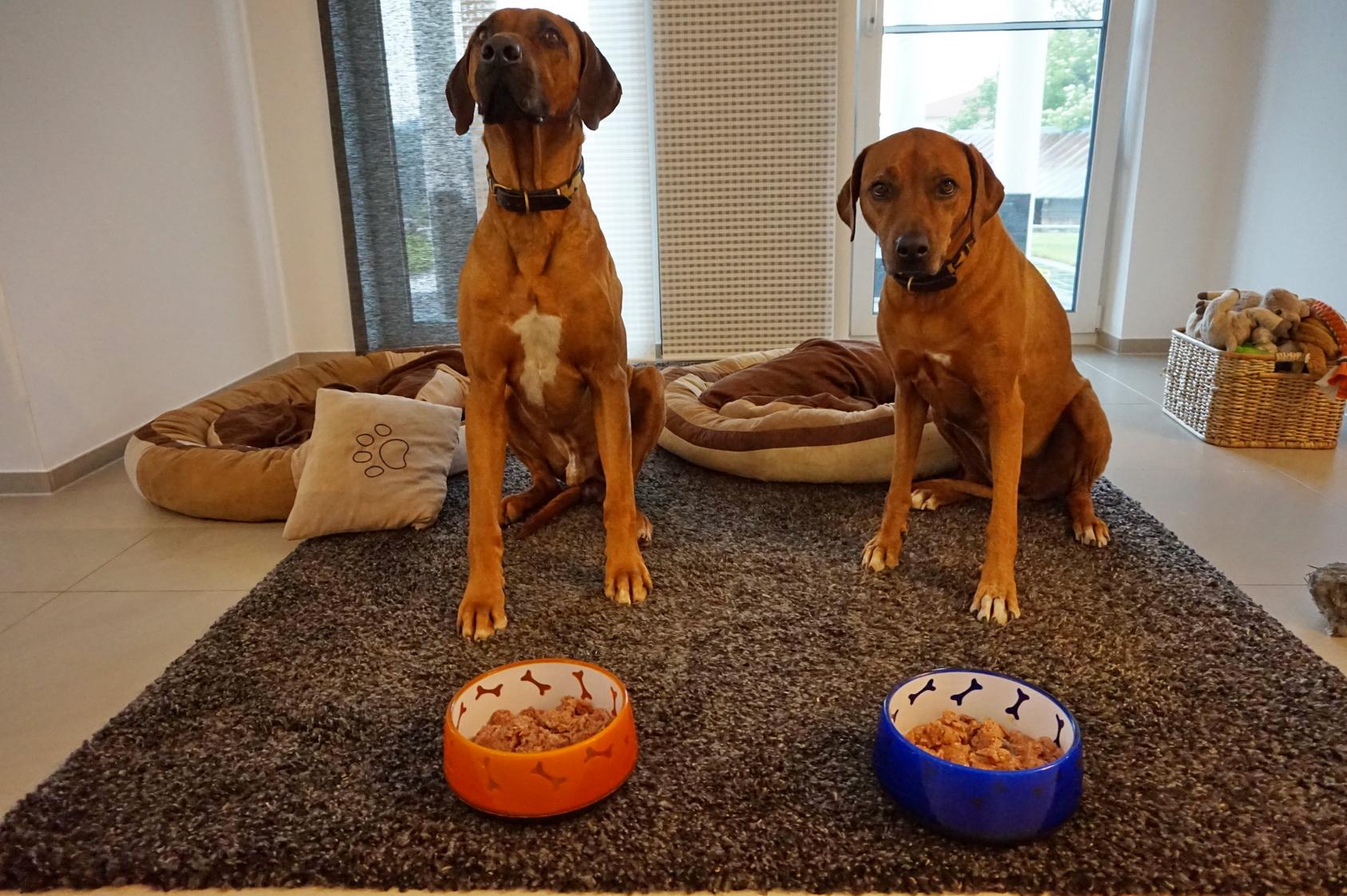 Foodprint Nassfutter Hunde 10