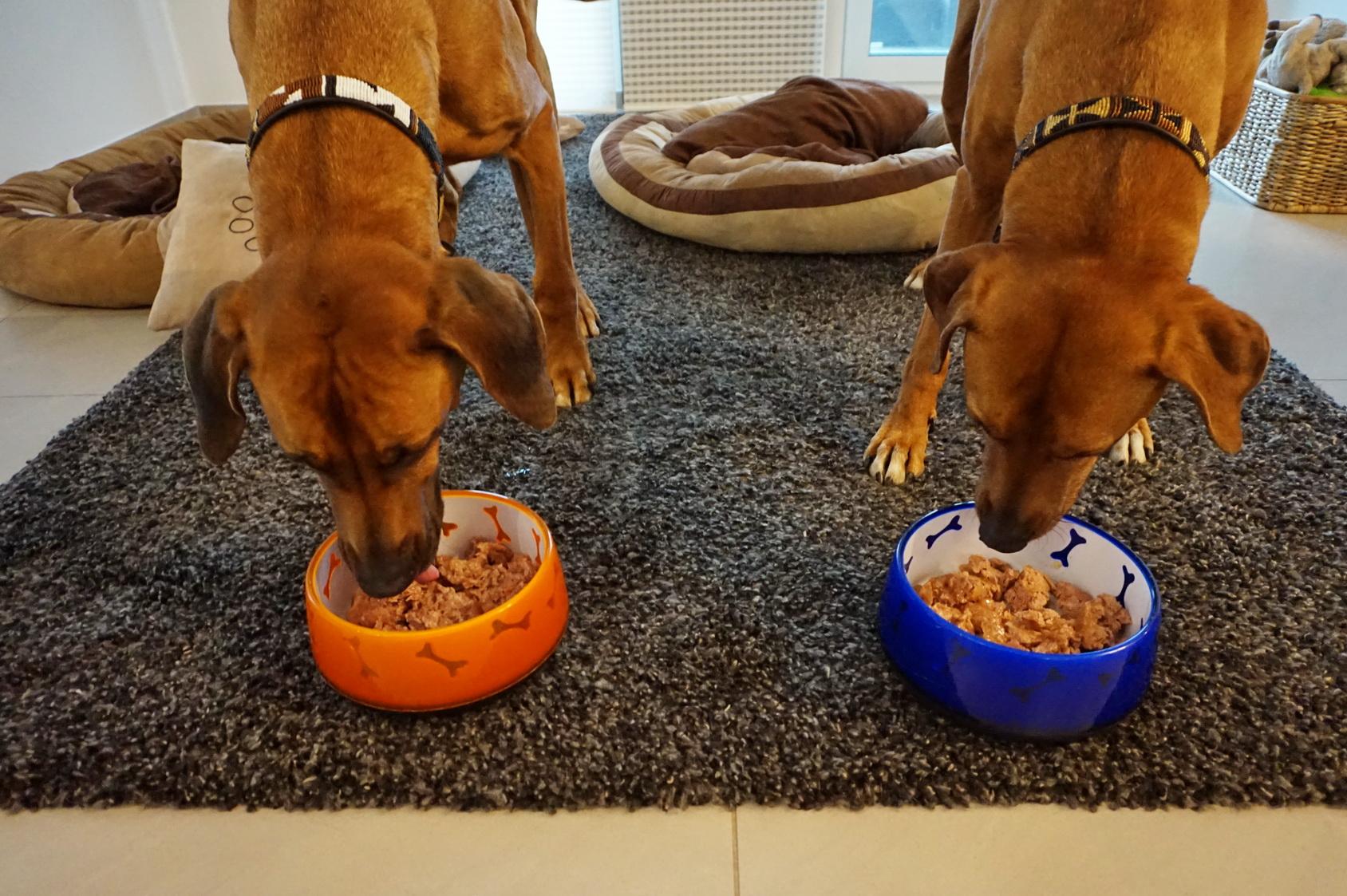 Foodprint Nassfutter Hunde 11