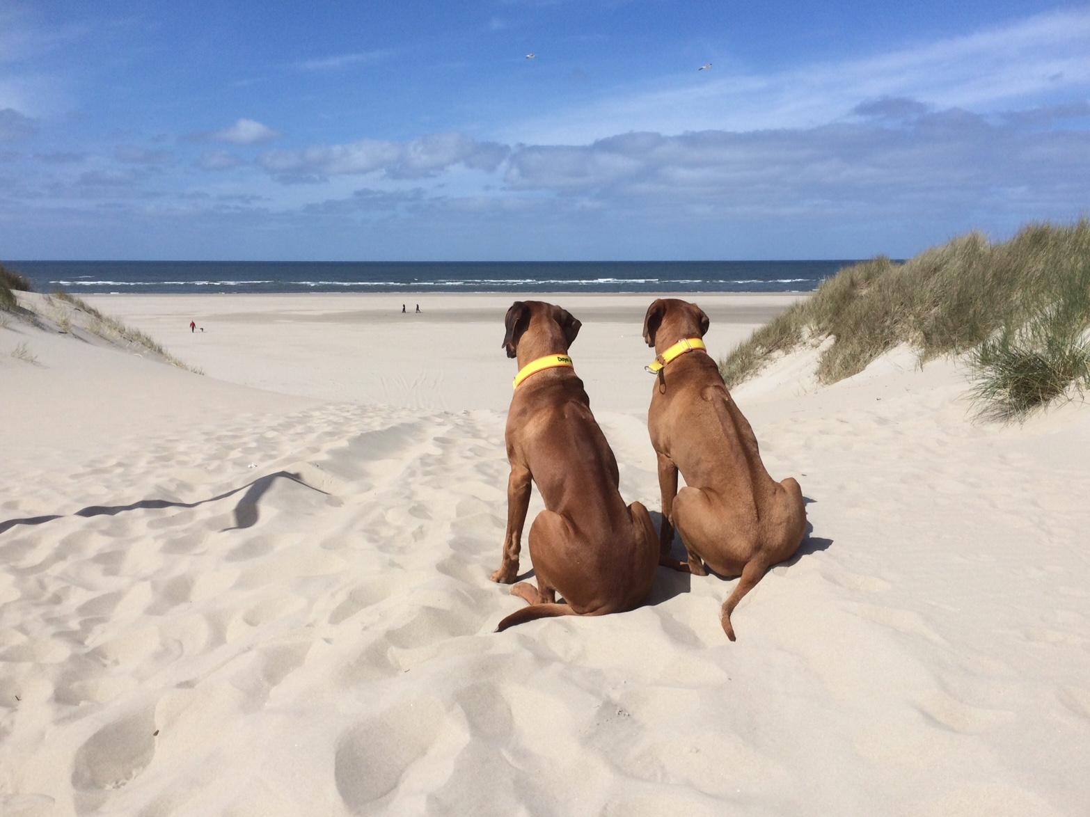 Texel - Dayo und Suri am Strand 2