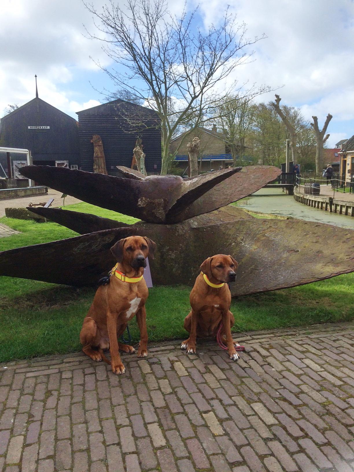 Texel - Museum Kaap Skil Dayo und Suri 1