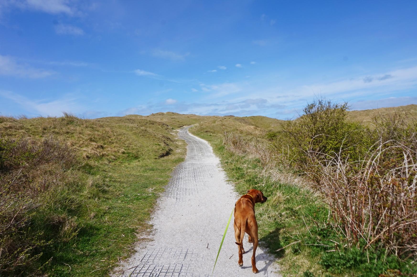 Texel - Strandspaziergang am Leuchtturm 9