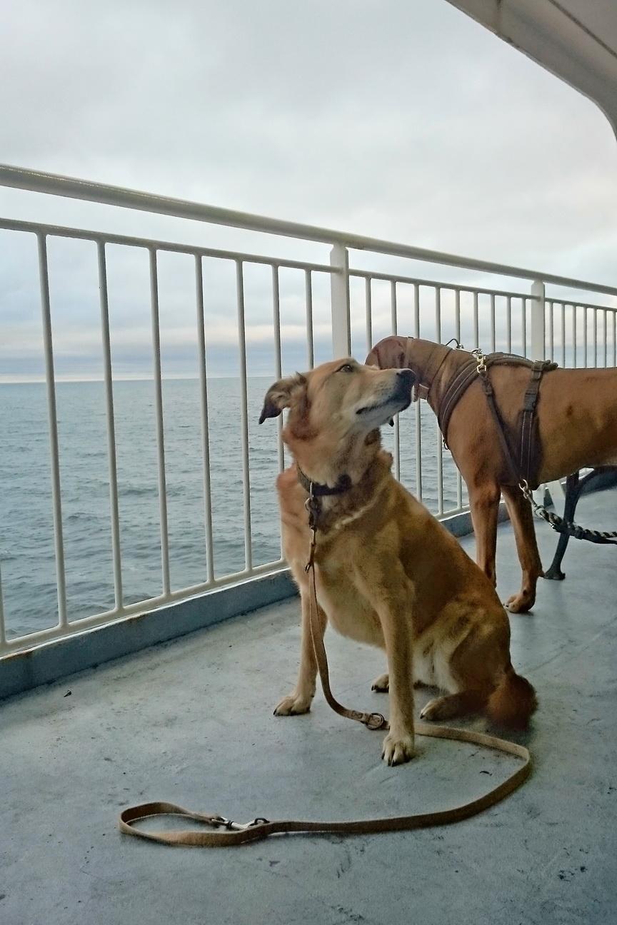 Auf der Fähre nach Schweden mit Hund