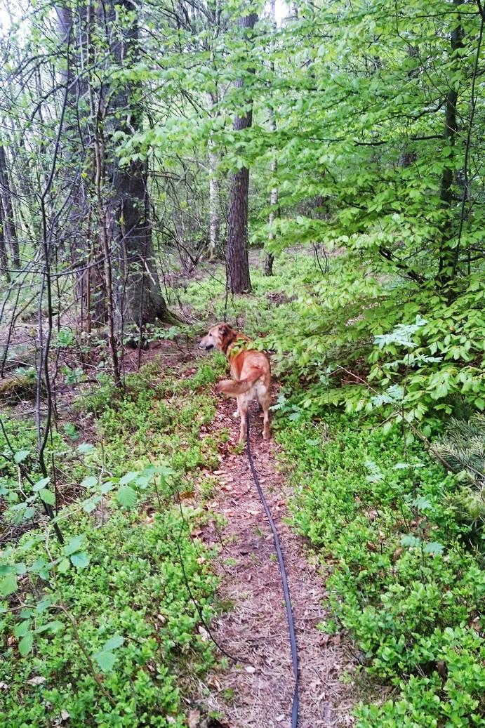 Die Fähre nach Schweden mit Hund ist kein Problem, aber nichts geht über einen Gassigang im Grünen