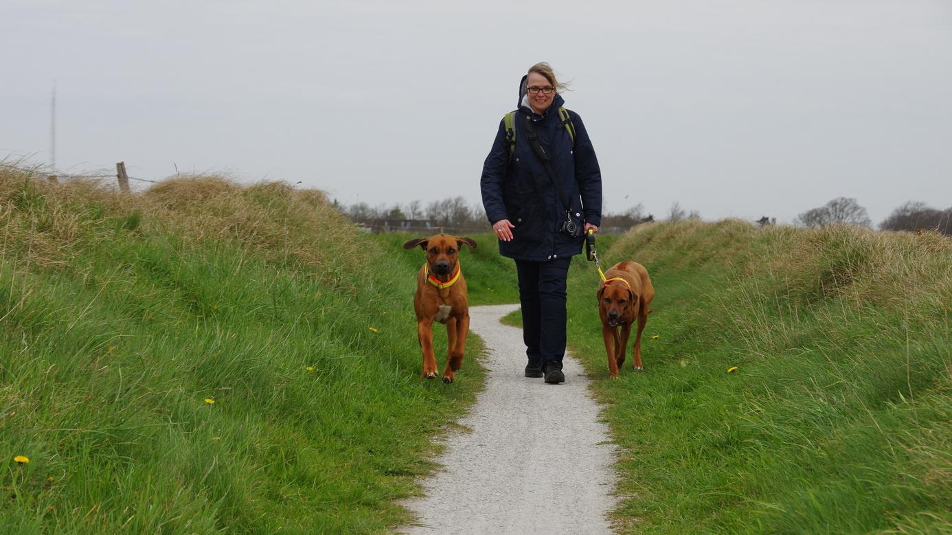 Texel - Wanderung Hoge Berg TH 1