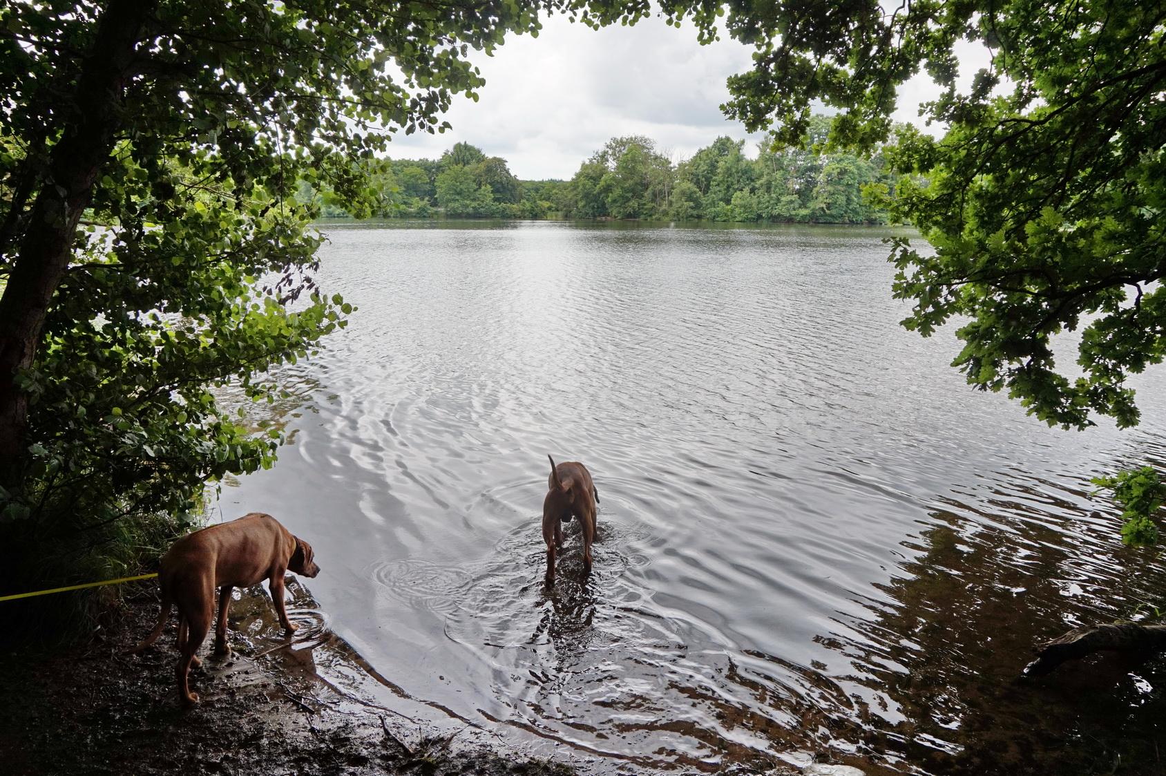 Hunde sind am Wasser der Westerwälder Seenplatte nicht so gerne gesehen