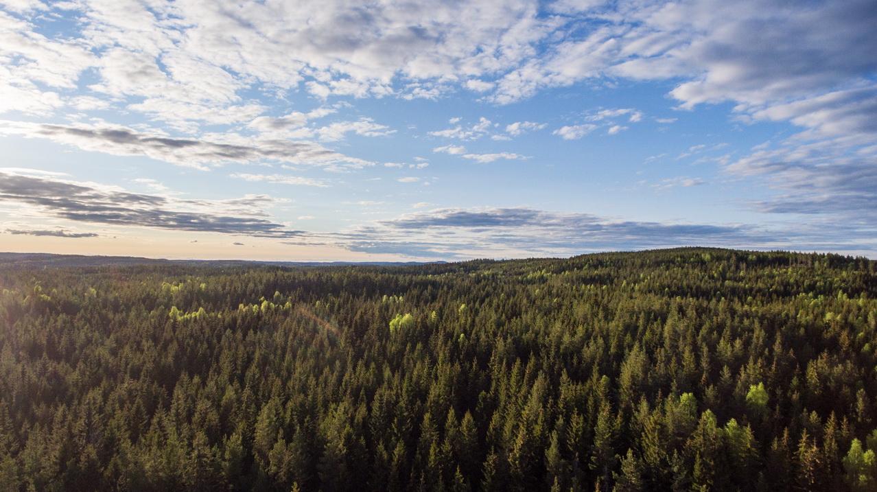 Der Wald hinter unserem Haus aus der Luft