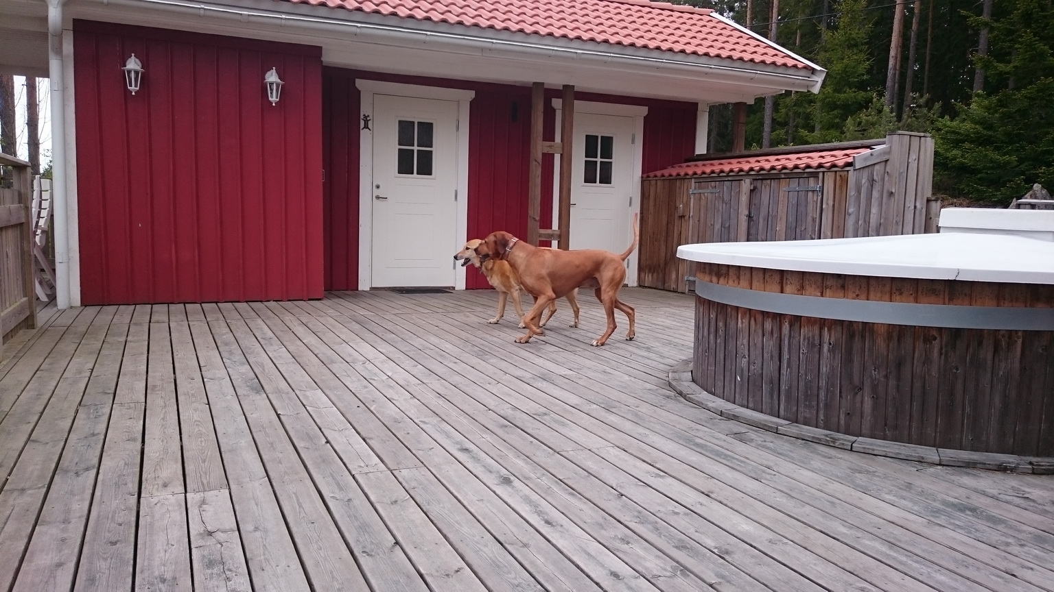 Die Pfeiffers in Schweden - Die Hunde können auf der großen Terrasse spielen