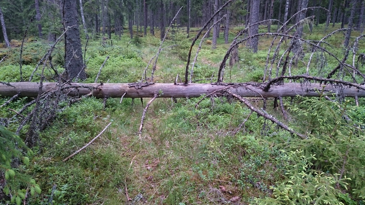 Die Pfeiffers in Schweden - Der Baum ist für uns kein Hindernis