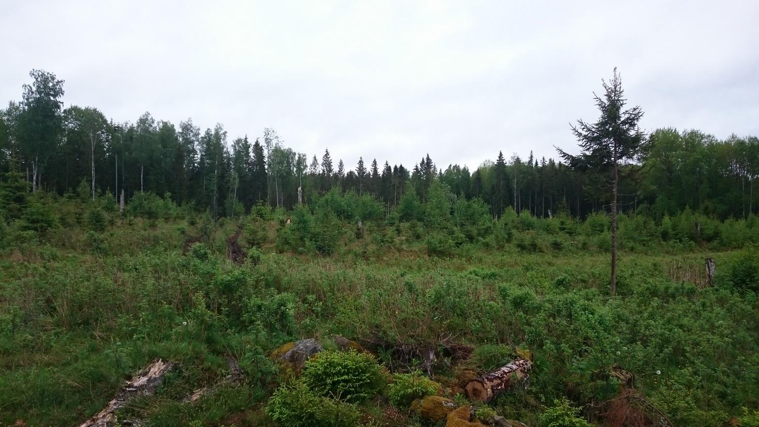 """Da stehen schon die """"neuen"""" Bäume"""