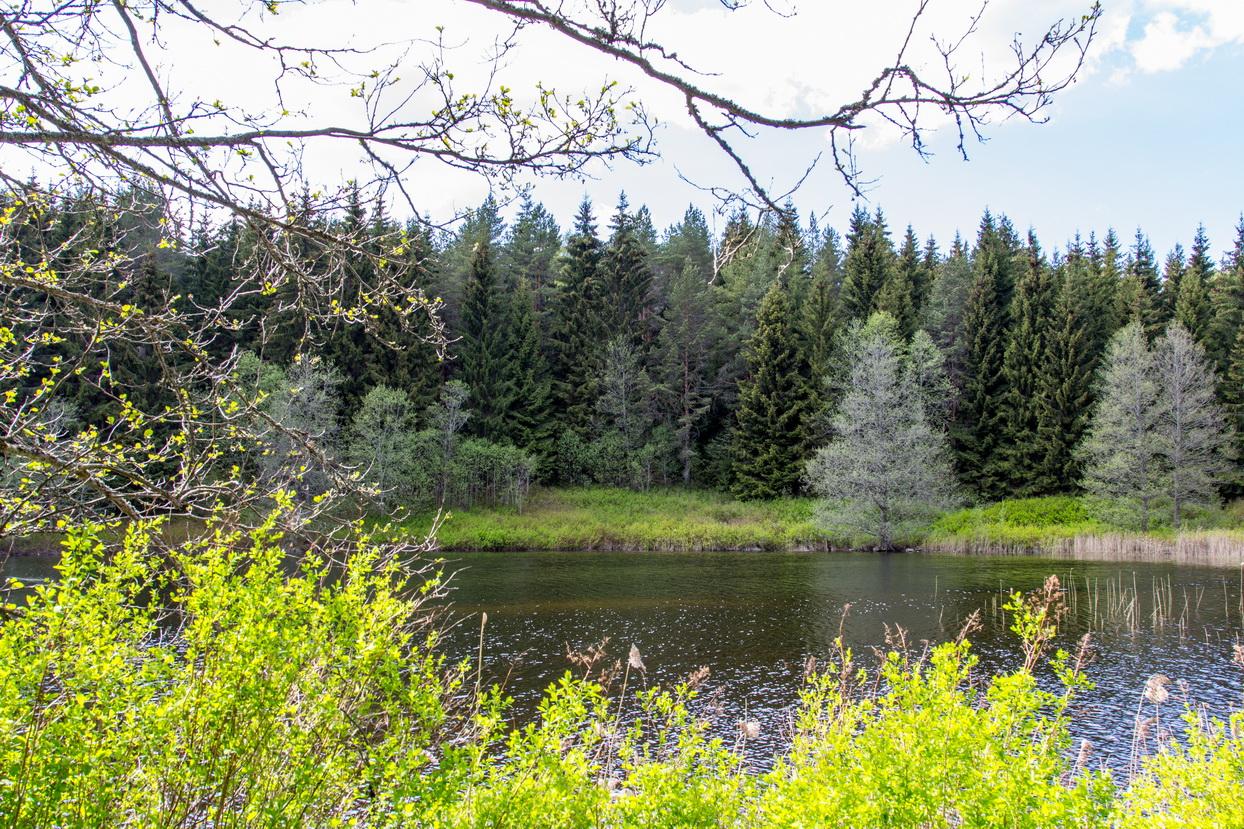Einer von 10.000 Seen in Värmland, an dem wir leider auch nicht bis ganz ans Wasser gelangt sind