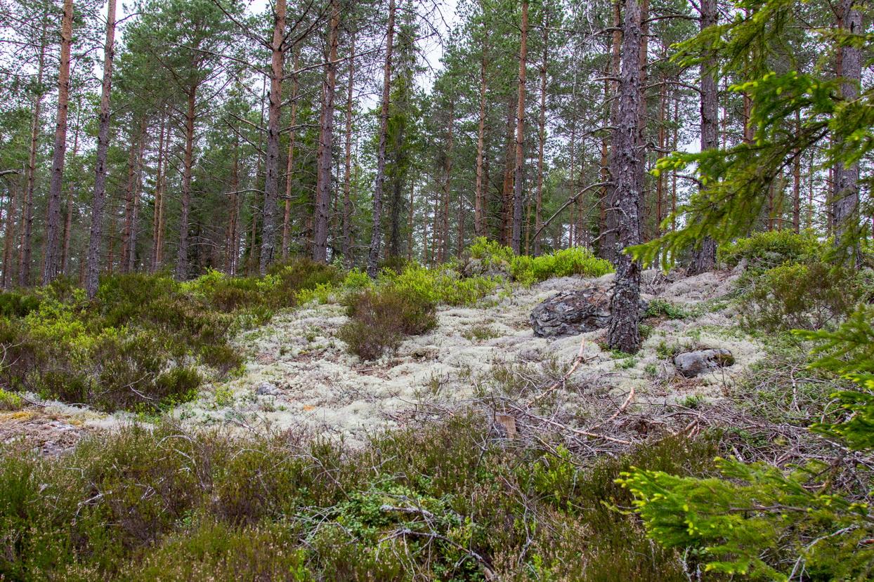 Hier sieht der Wald ganz anders aus