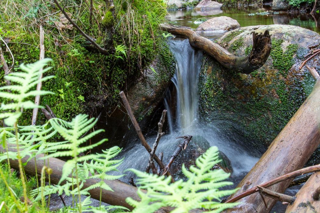 Romantischer Bachlauf mitten im Wald